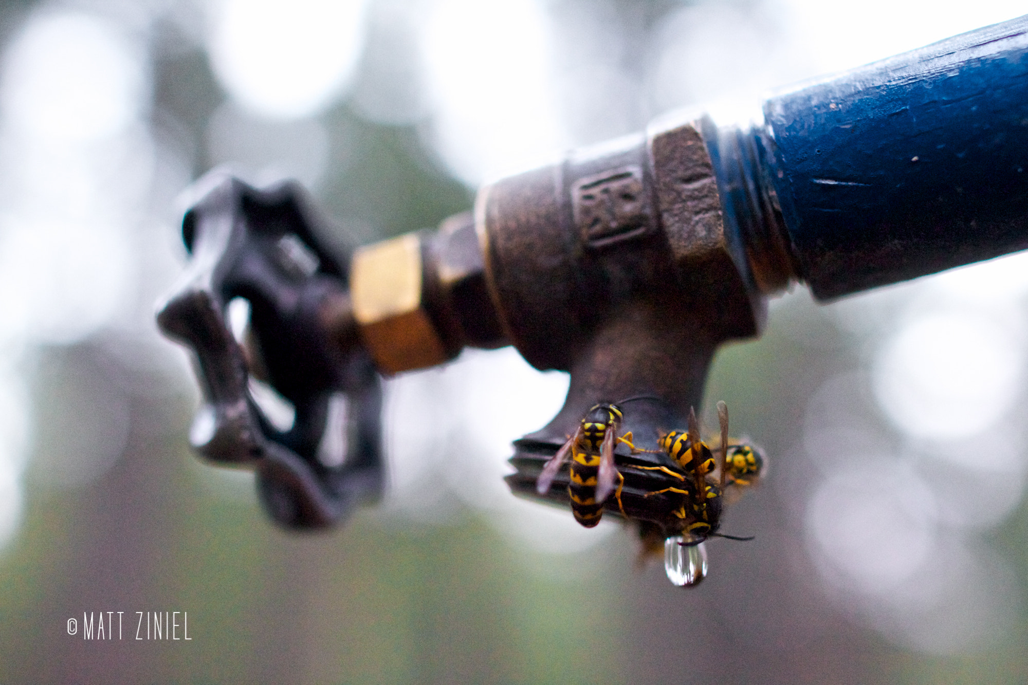 Photograph Thirsty Bees by Matt Ziniel on 500px