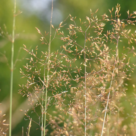 nature, Sony DSC-H90