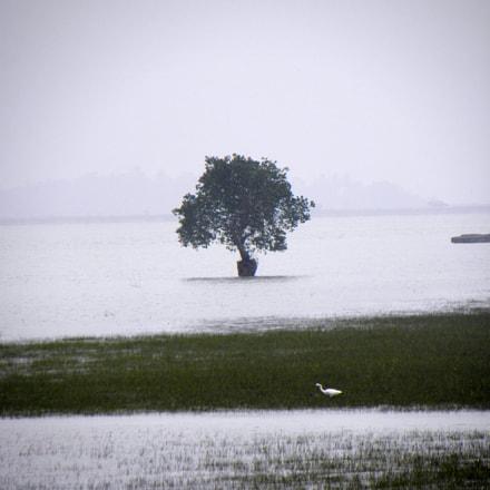 The Tree, Nikon COOLPIX P90
