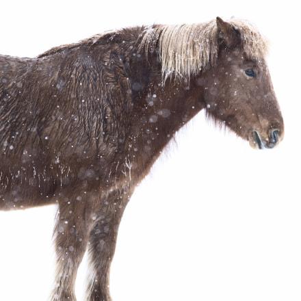 Horse Portrait #4, Nikon D810, AF-S Nikkor 400mm f/2.8D IF-ED II