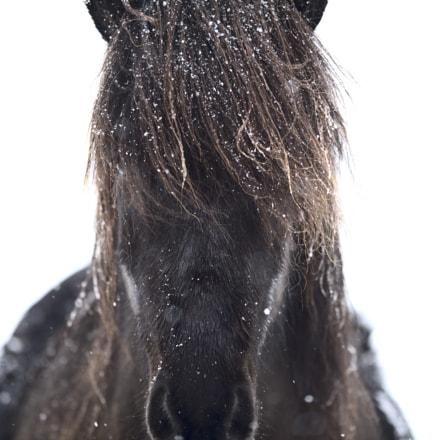 Horse Portrait #2, Nikon D810, AF-S Nikkor 400mm f/2.8D IF-ED II
