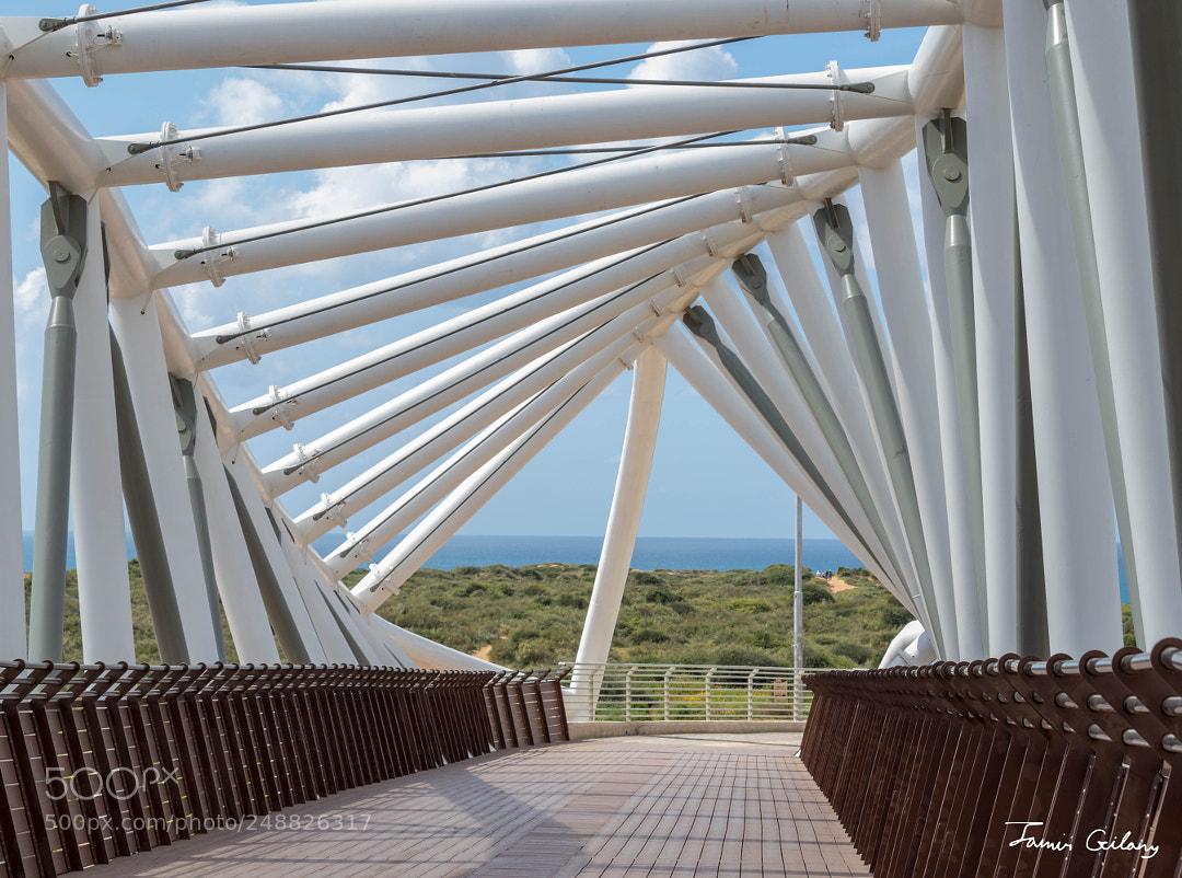 Bridge Of The Reserves