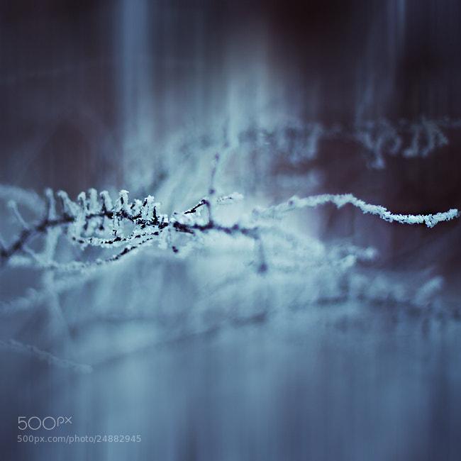 Photograph Abstract Winter by Joanna Rzeźnikowska on 500px