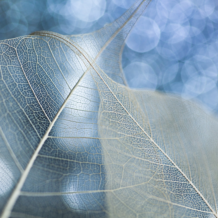 Photograph Ghost Leaves by Joanna Rzeźnikowska on 500px