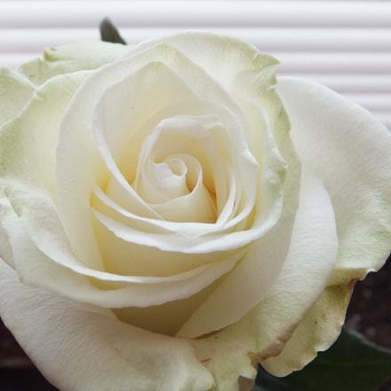white beauty 2, Fujifilm FinePix F750EXR