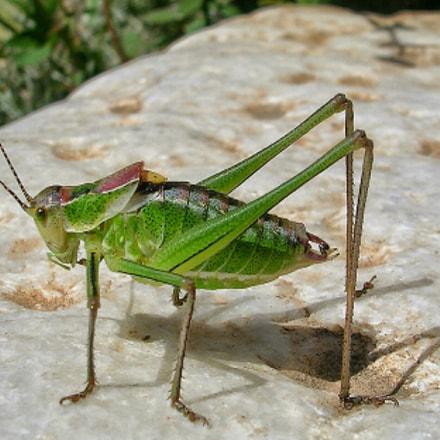 Grasshopper, Nikon E3200