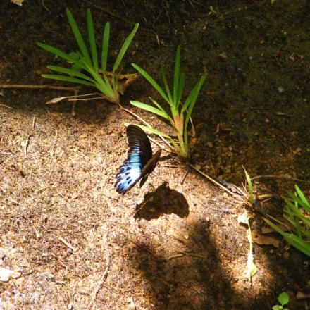Butterfly shadow, Fujifilm FinePix S5800 S800