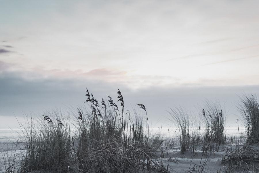 vanilla sunrise, автор — Christoph Scholz на 500px.com