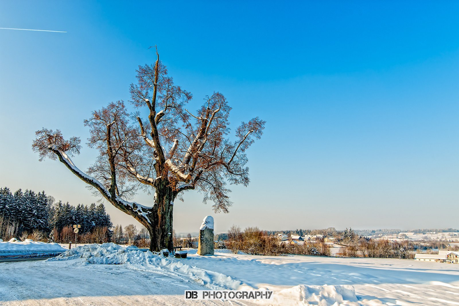 Photograph One of my favorite trees by Hans Weichselbaumer on 500px