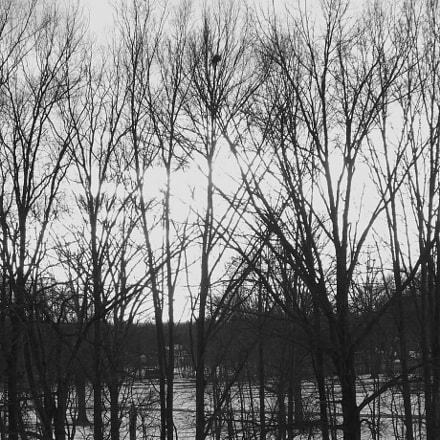 Winter beauty, Fujifilm FinePix S4250WM
