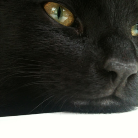 My cat Mr Mojo, Apple iPhone 3GS