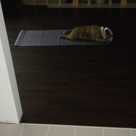 Downward Dog, Fujifilm FinePix J30 J32 J38