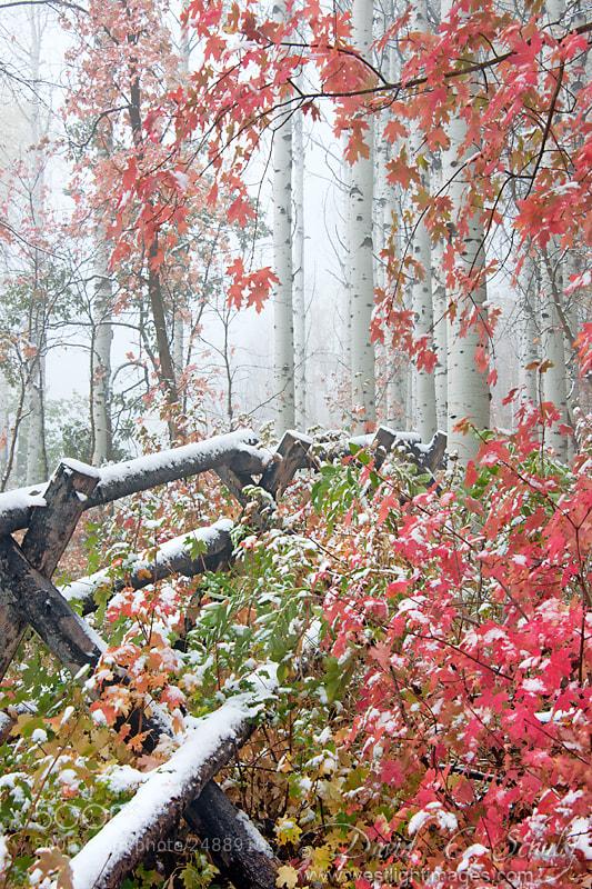 Photograph Aspen in Fog by David C. Schultz on 500px