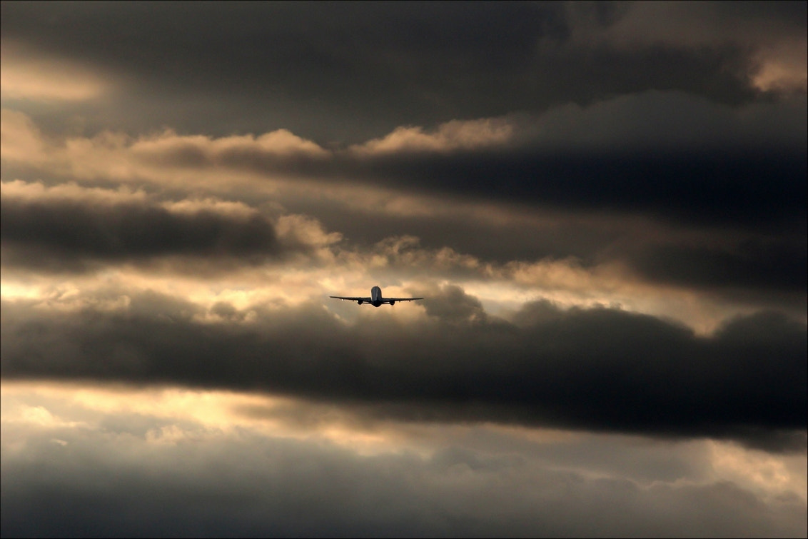 Photograph Reaching the sky... by hans rietvelt  on 500px