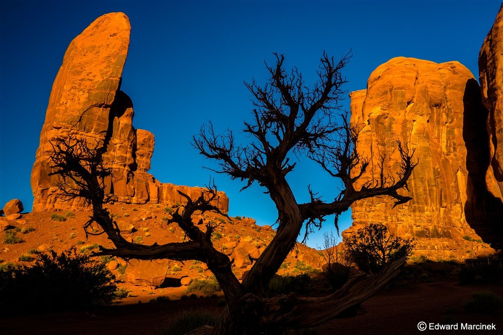 Photograph Ghost tree at Monument Valley by Edward Marcinek on 500px