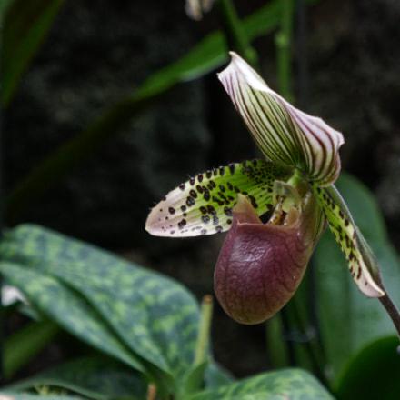 Orchid 2, Panasonic DMC-TZ101