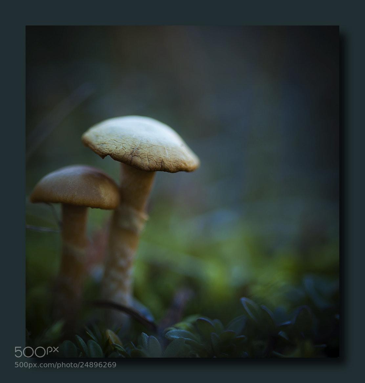 Photograph Mushrooms by Margrét Elfa Jónsdóttir on 500px