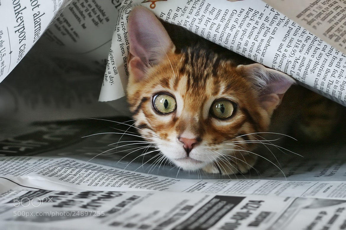 Photograph Read the Paper Yet? by Sharon Smith on 500px