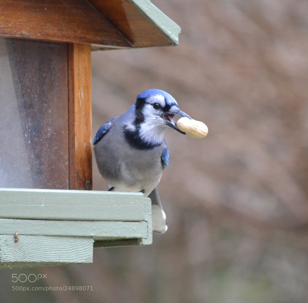 Photograph An afternoon snack by Katie Collins on 500px