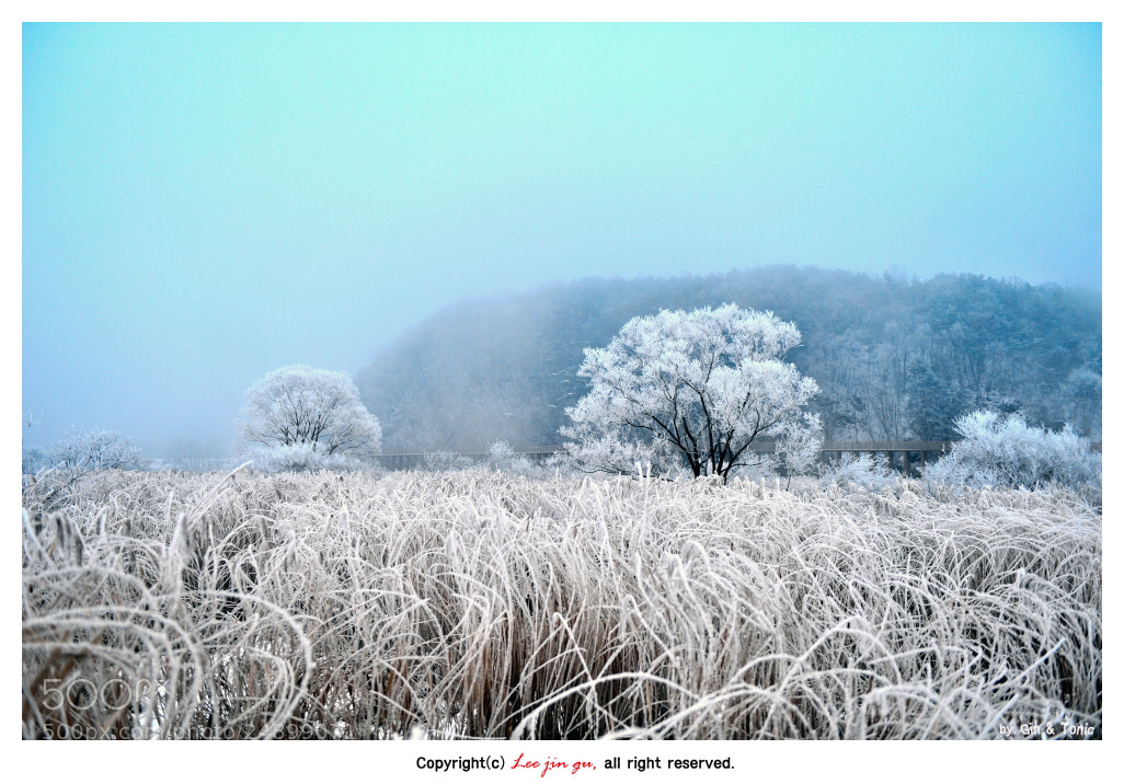 Photograph WINTER by Jin-Gu Lee on 500px