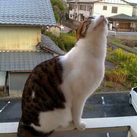 mimi, Apple iPhone 3G