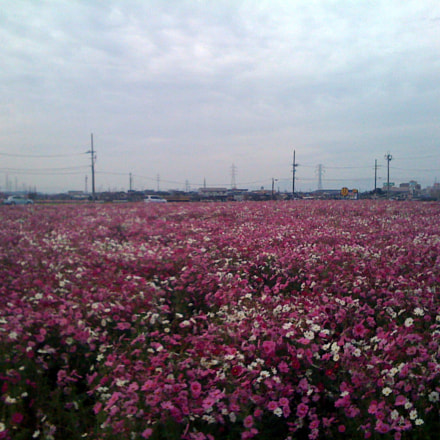 flor (), Apple iPhone 3G