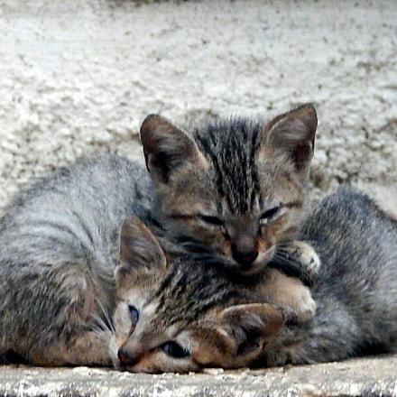 Cuddling Kitties, Nikon COOLPIX AW120