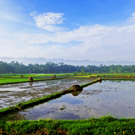 Beautiful rice fields in, Fujifilm FinePix F500EXR