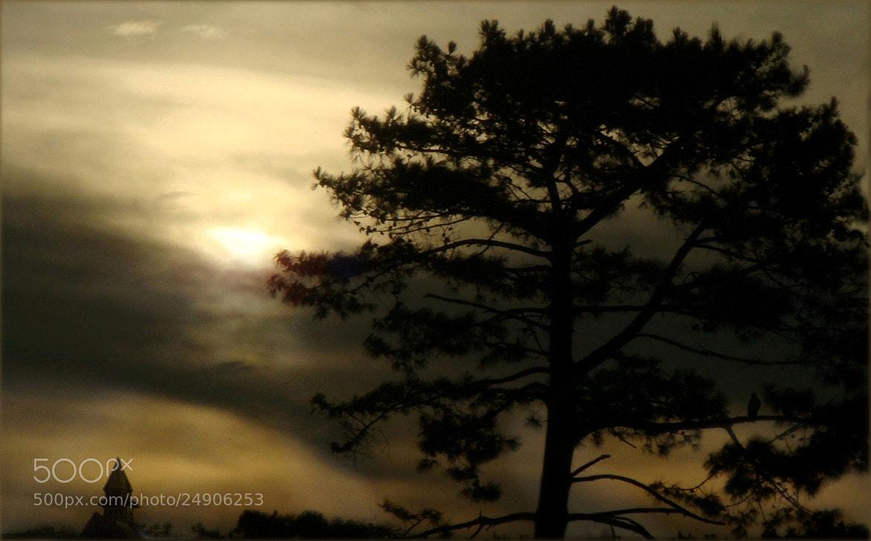 Photograph I'll follow the sun by Ian Blöckhead on 500px