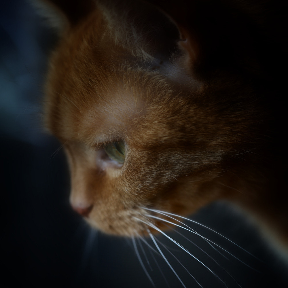 Photograph whiskers... by Leila Raymond on 500px