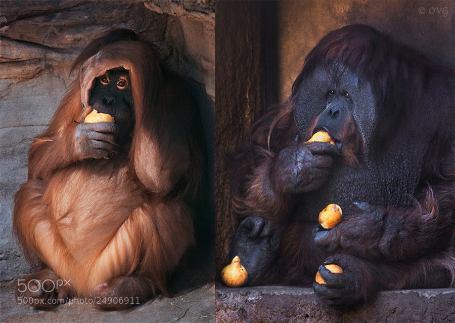 Photograph The difference in status by Olga Gladysheva on 500px