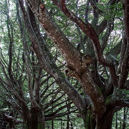 Through the trees, Sony DSC-W100
