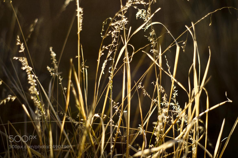 Photograph Untitled by Luke Chua on 500px