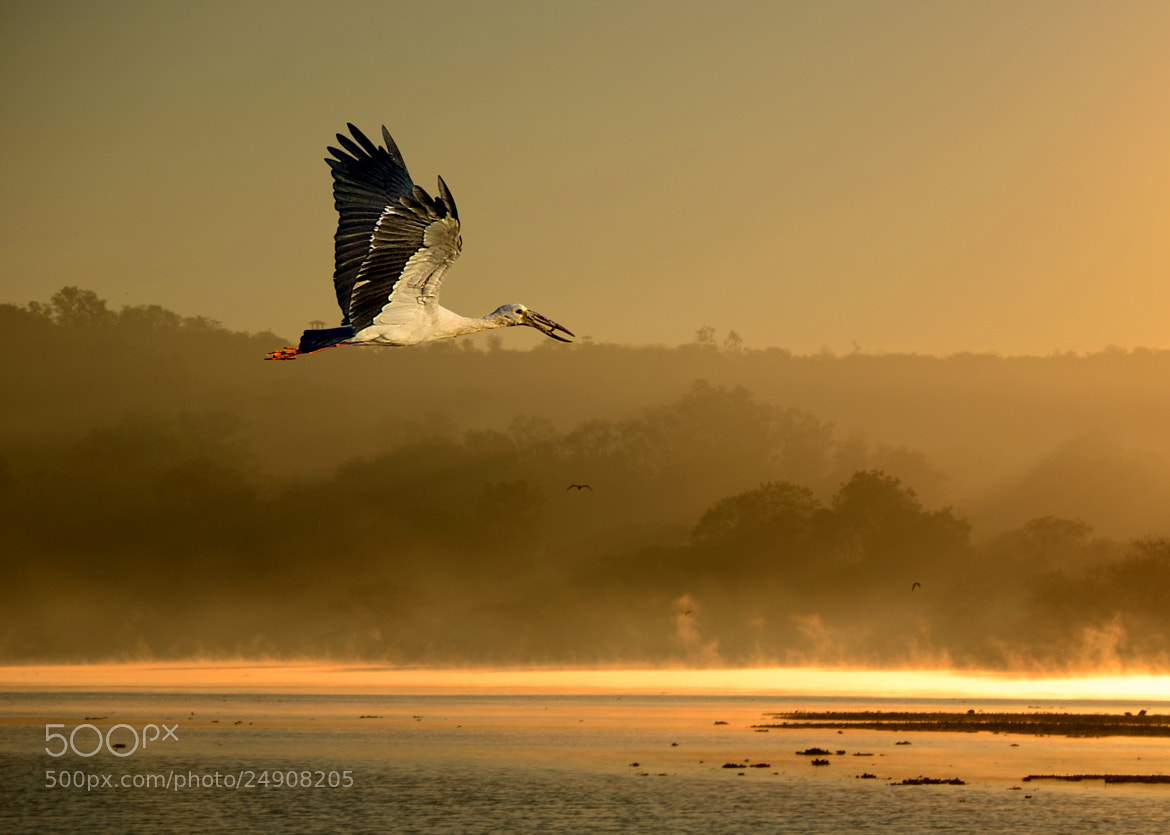 Photograph A beautiful Fly by Hardik Upadhyay on 500px