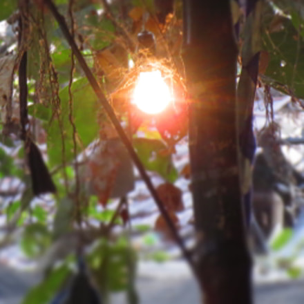 The Glowing Bulb .., Canon IXUS 510 HS