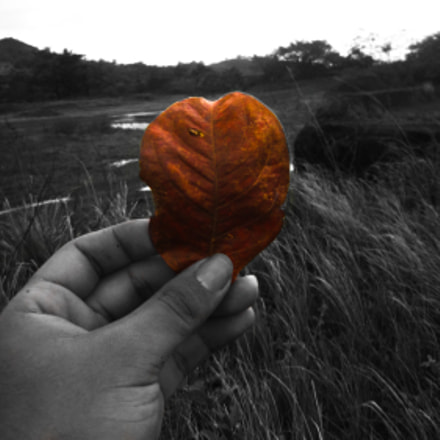 Let's fall in fall, Canon POWERSHOT SD980 IS
