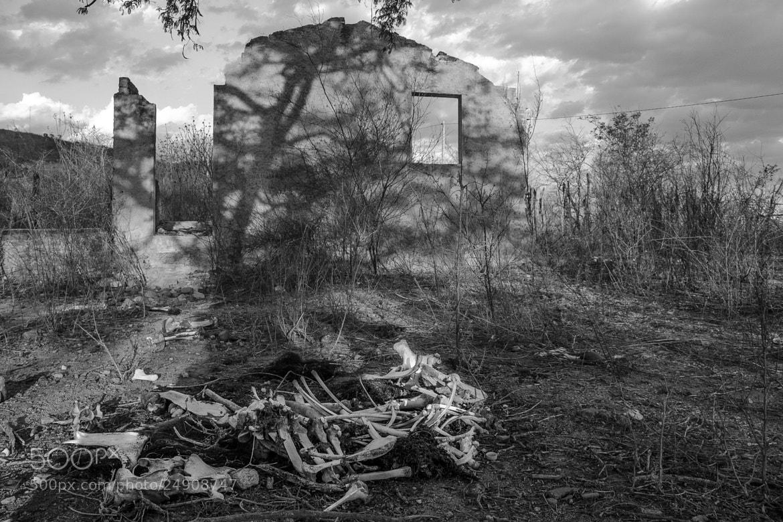 Photograph Seca by Novais Almeida on 500px