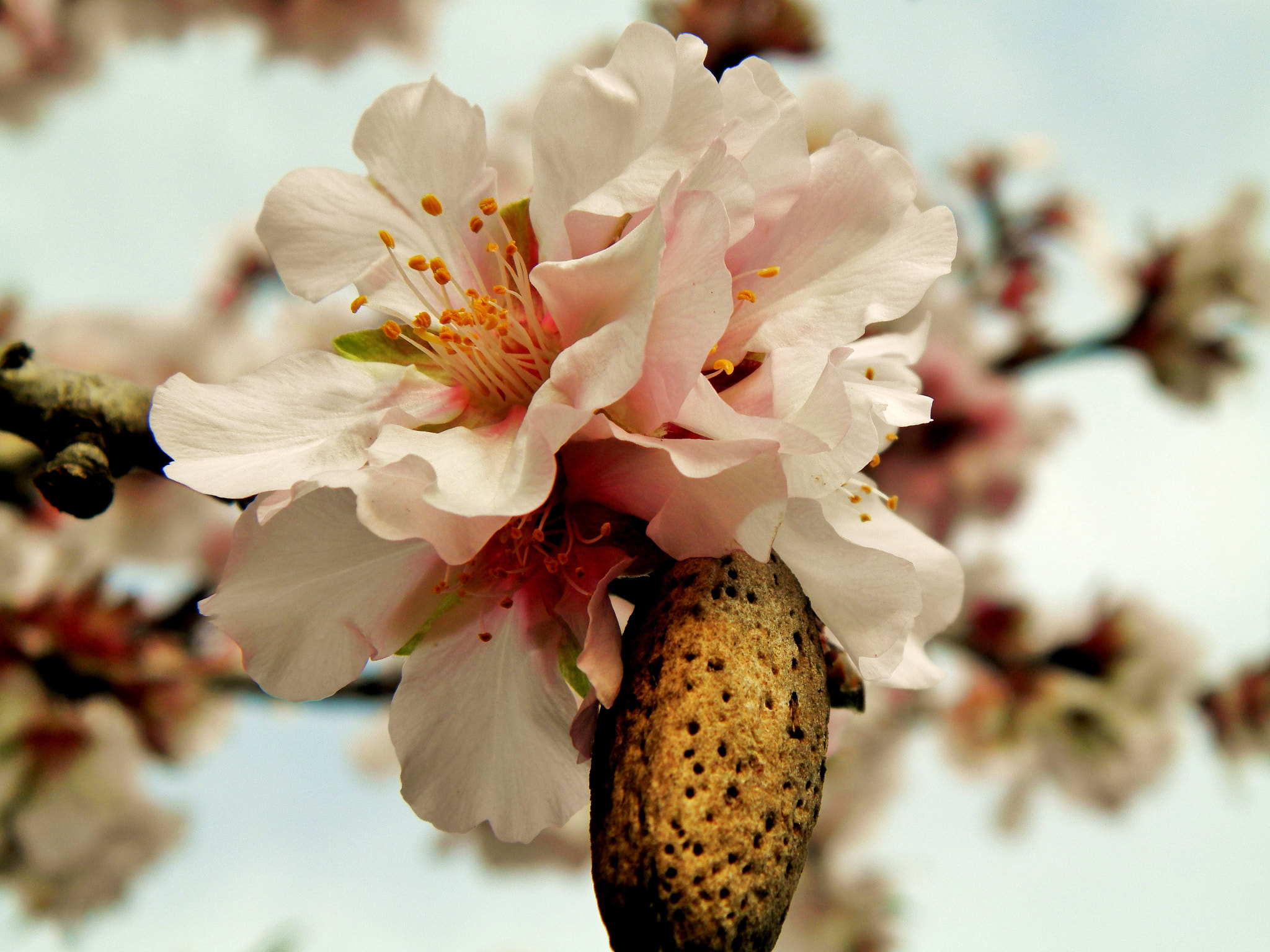 Photograph Almond by Magda DJM on 500px
