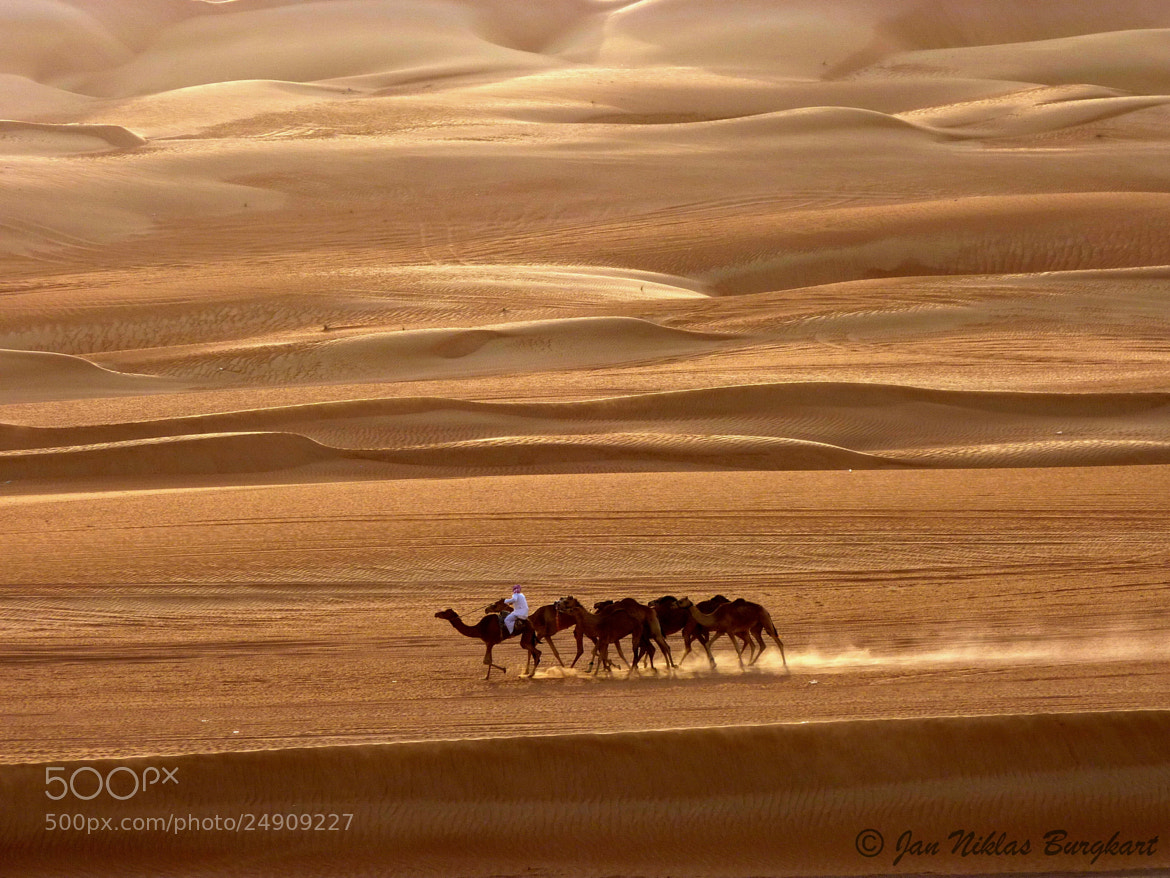 Photograph Camels in the desert by Jan Niklas Burgkart on 500px
