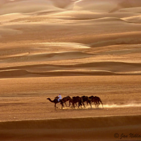 Camels in the desert by Jan Niklas Burgkart (JanNiklasBurgkart)) on 500px.com
