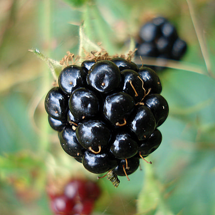 Blackberry, Sony DSC-W30