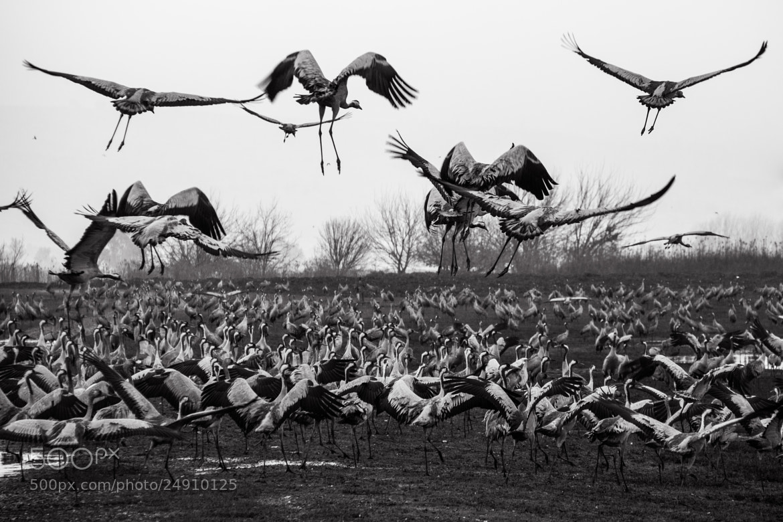 Photograph Air Raid by Rotem Littman on 500px