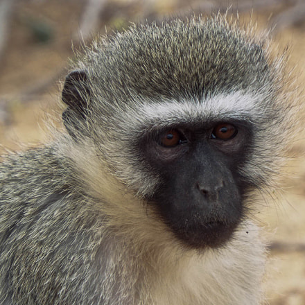 Monkey face, Fujifilm FinePix S8200