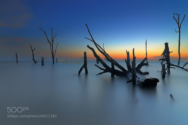 Photograph Kelanang by Kamrul Arifin on 500px