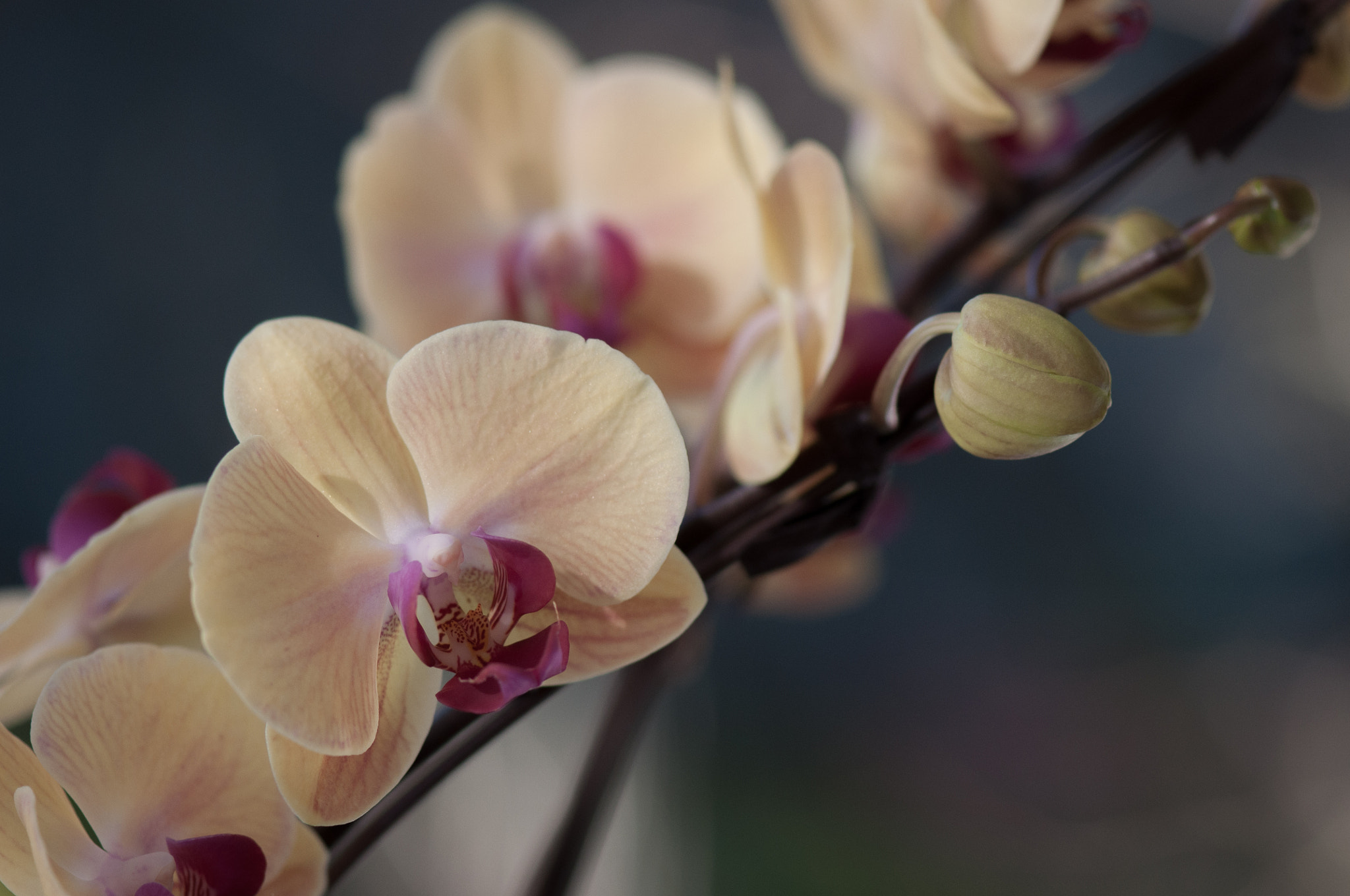 Photograph Orchid by Ly Son Le on 500px