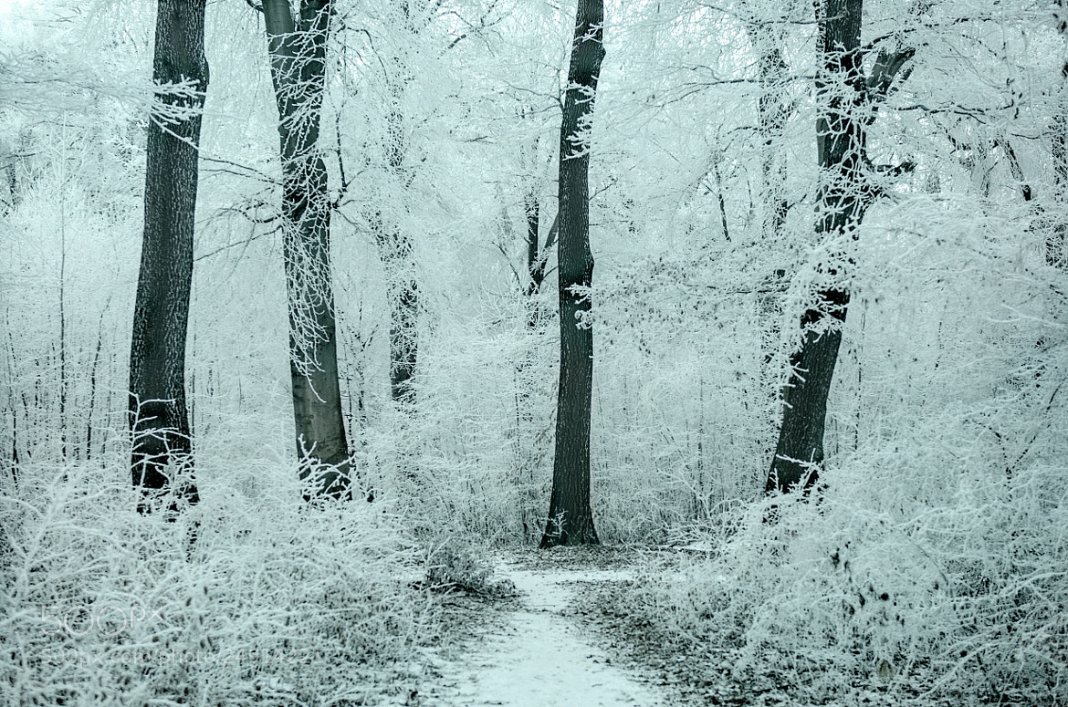 Photograph Frosty Forest by Csilla Zelko on 500px