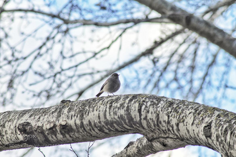 Photograph little bird on a branch by richard cauchy on 500px