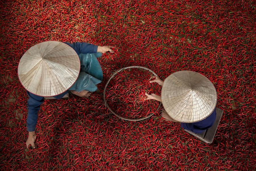 Chilli by Sarawut Intarob on 500px.com
