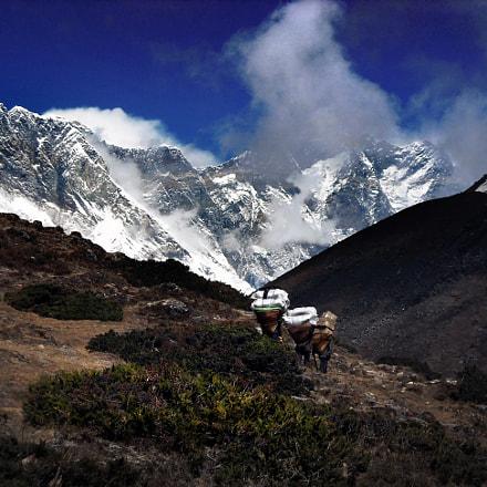 Sherpas The Invisible Men, Nikon COOLPIX L18