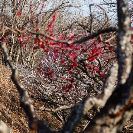Iwamoto Mountain Park, Canon EOS 5D MARK II, Canon EF 100mm f/2.8 Macro